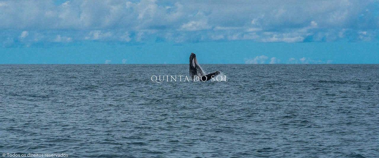 Passeio das Baleias Porto Seguro