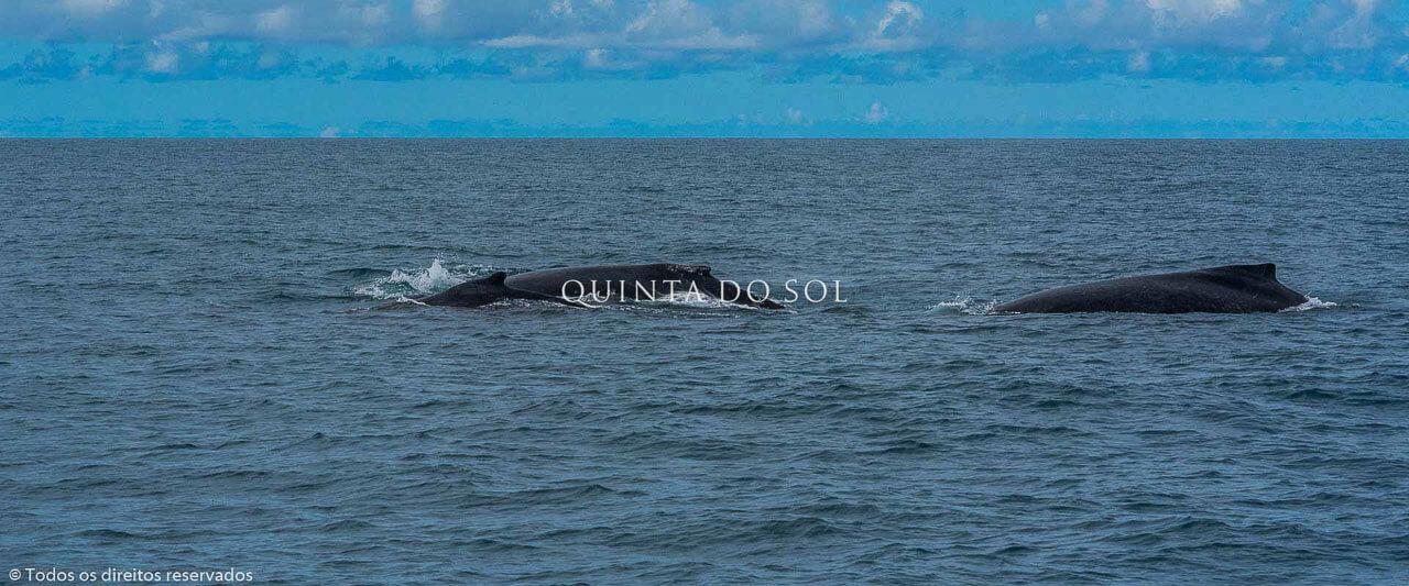 Passeio das Baleias em Porto Seguro