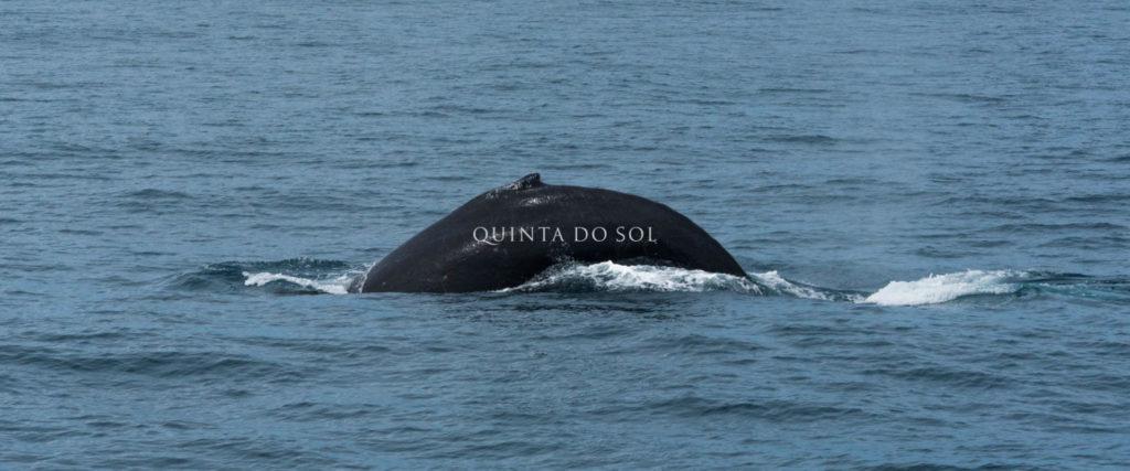 baleia jubarte em porto seguro