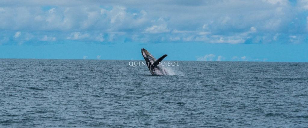 baleias jubartes passeio porto seguro bahia