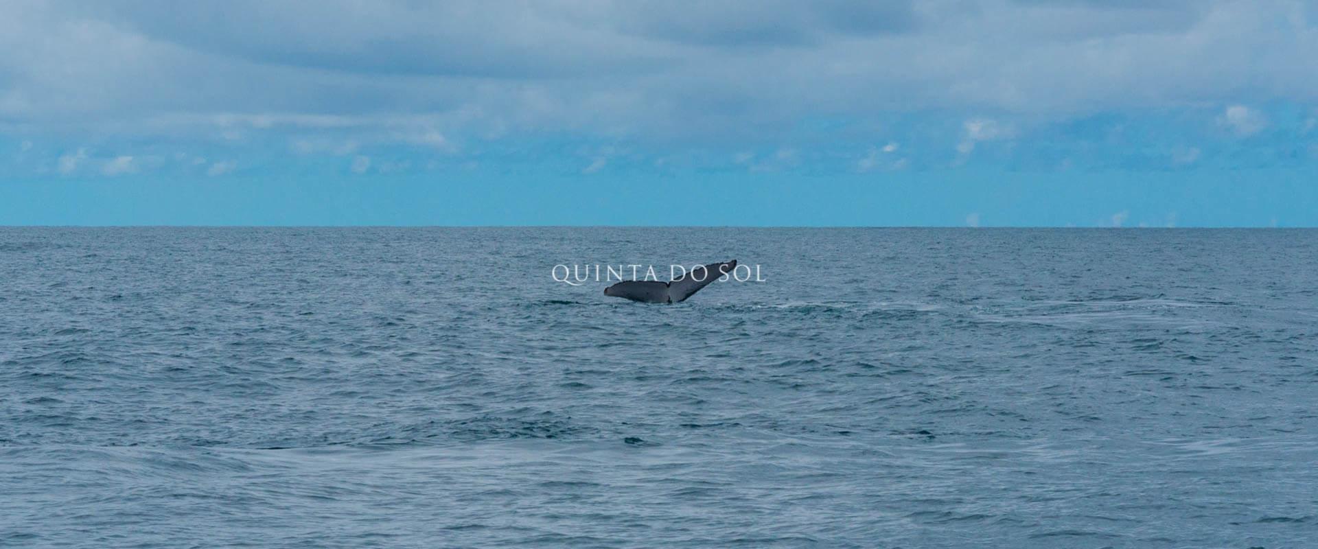observação de baleias jubarte porto seguro