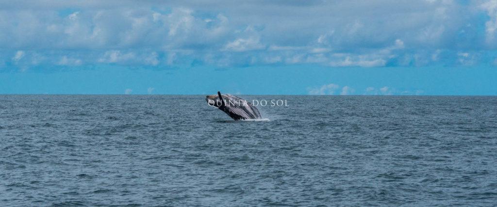 observação de baleias porto seguro