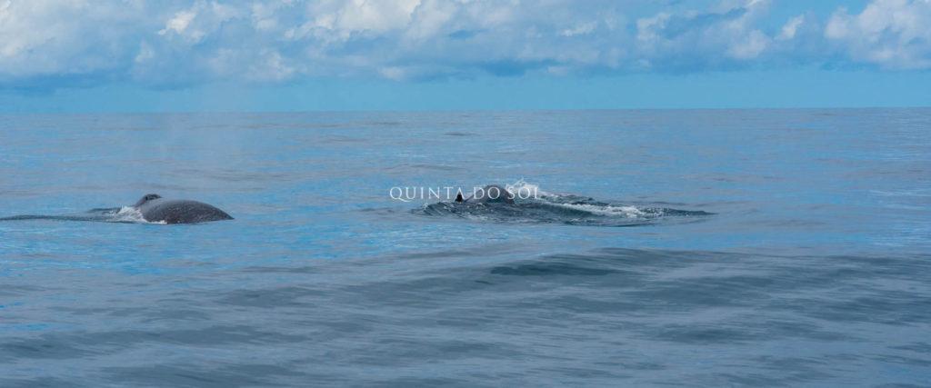 passeio baleia jubarte porto seguro