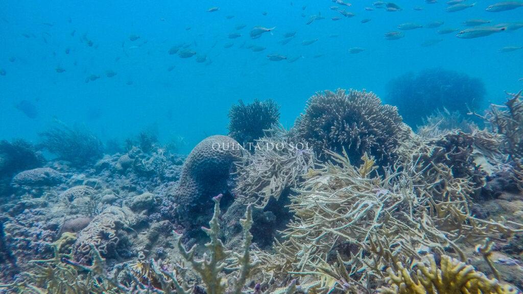Mergulho em Porto Seguro no mar azul