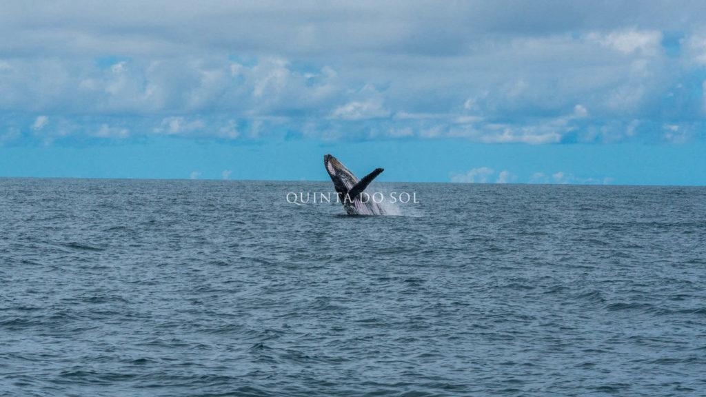 Passeio das baleias Jubarte em Porto Seguro