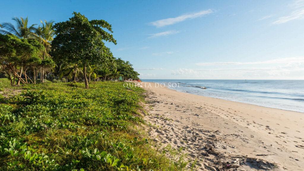 Praia de Curuípe vegetação, areia e mar